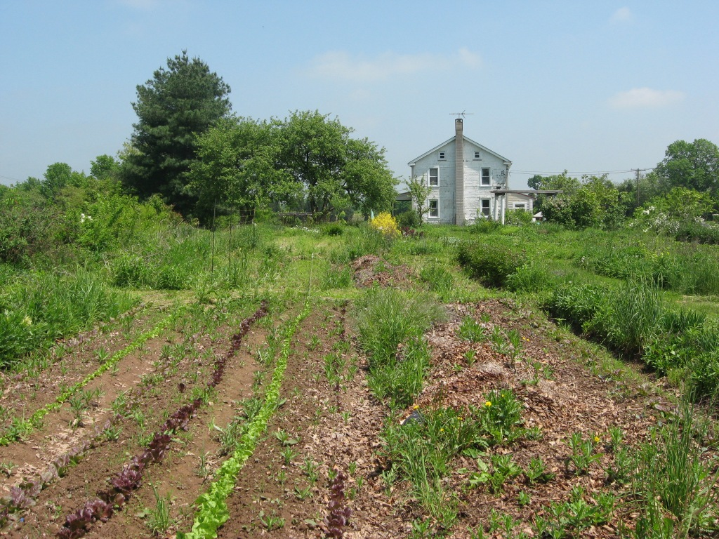 Farm Snaps