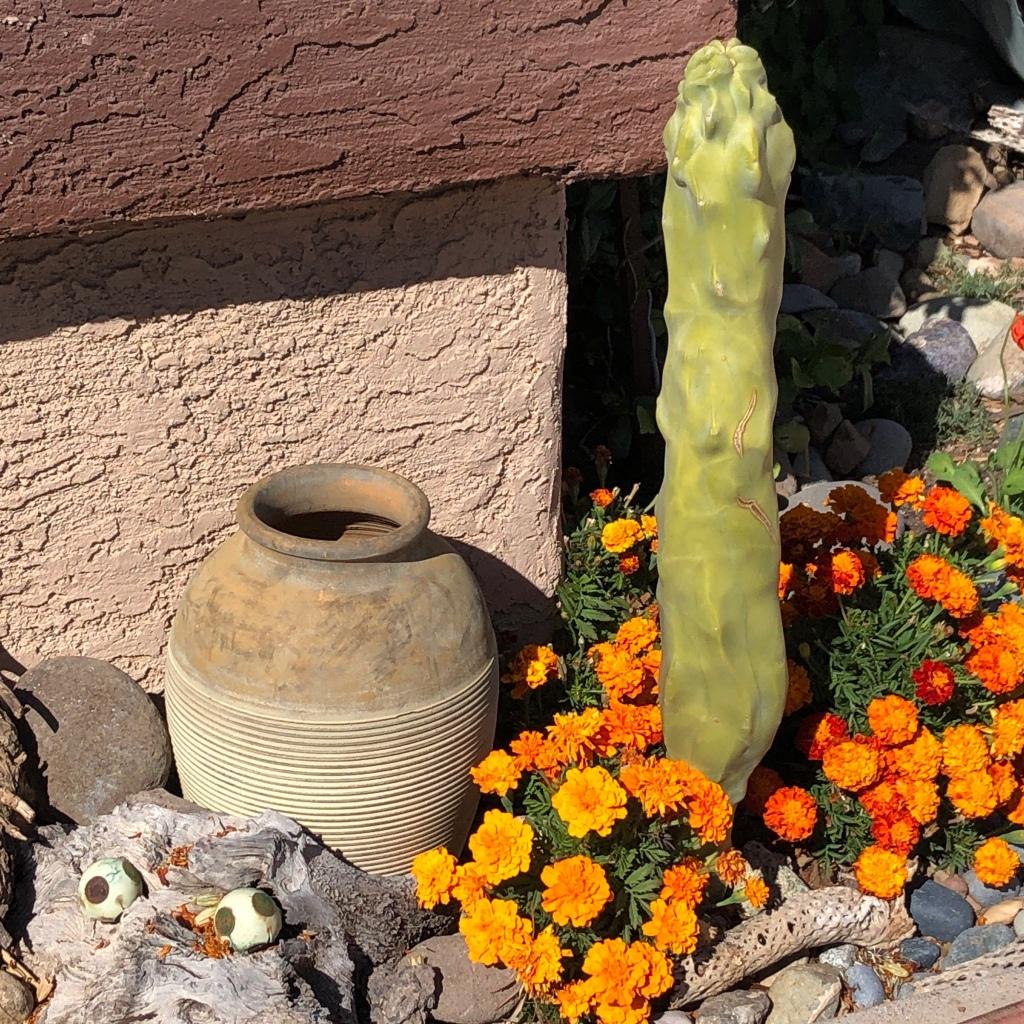 Marigolds-spineless-cactus